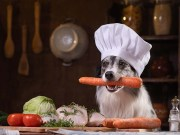 13 Great Books for Homemade Dog Food Beginners
