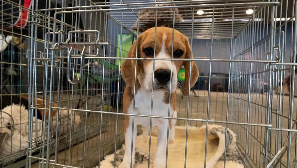 4 Ways This Major Pet Supplier Ties to Animal Cruelty