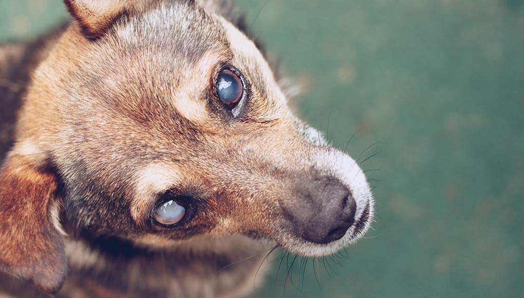 8 Essential Blind Dog Products You Must Have