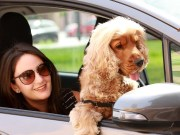 Ridesharing for Dogs and Their Owners