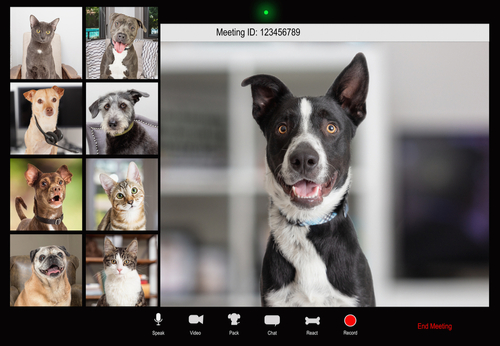 video editing pets