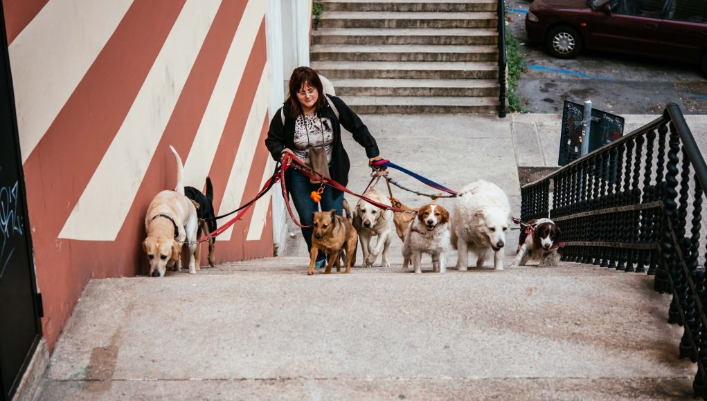 Walk Dogs for Money- How Much You Can Earn and How to Start