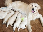How to Start a Dog Breeding Business- The Guide