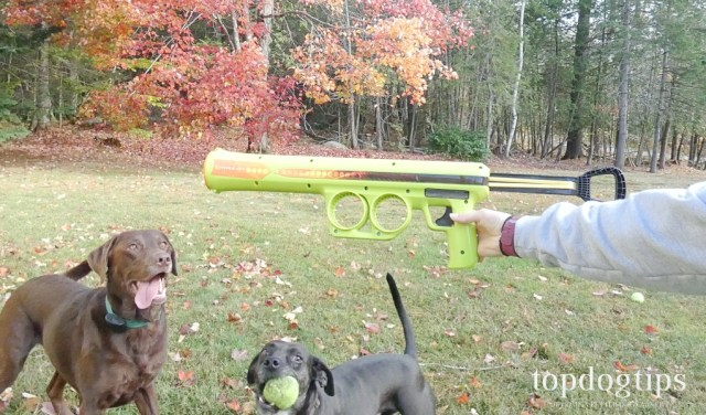 Hyper Pet K9 Kannon