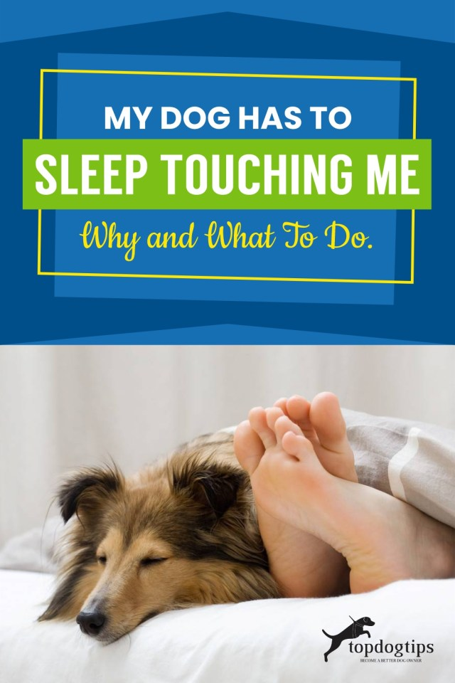 My Dog Has to Sleep Touching Me Why and What to Do