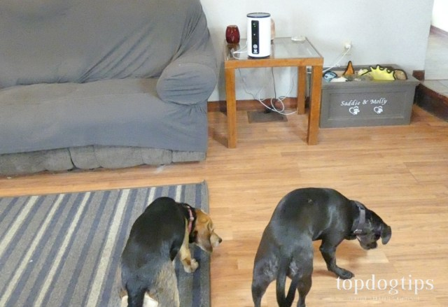 dogs eating treats from camera