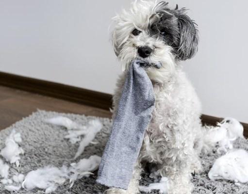 Coolest Socks for Dog Lovers
