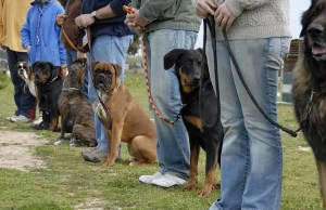 19 Easiest Dog Breeds to Train