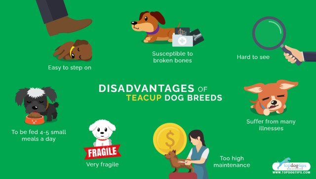 Teacup Dog Breeds