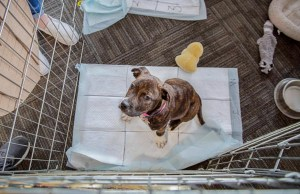 Dog Pees in Crate