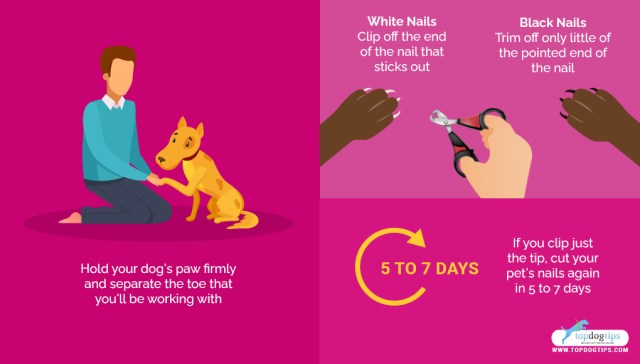 Use Dog Nail Clippers