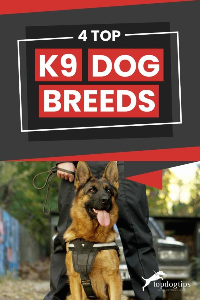 Top K9 Dog Breeds