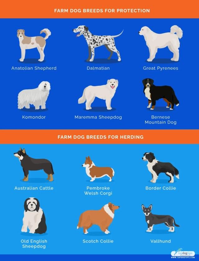 Farm Dog Breeds