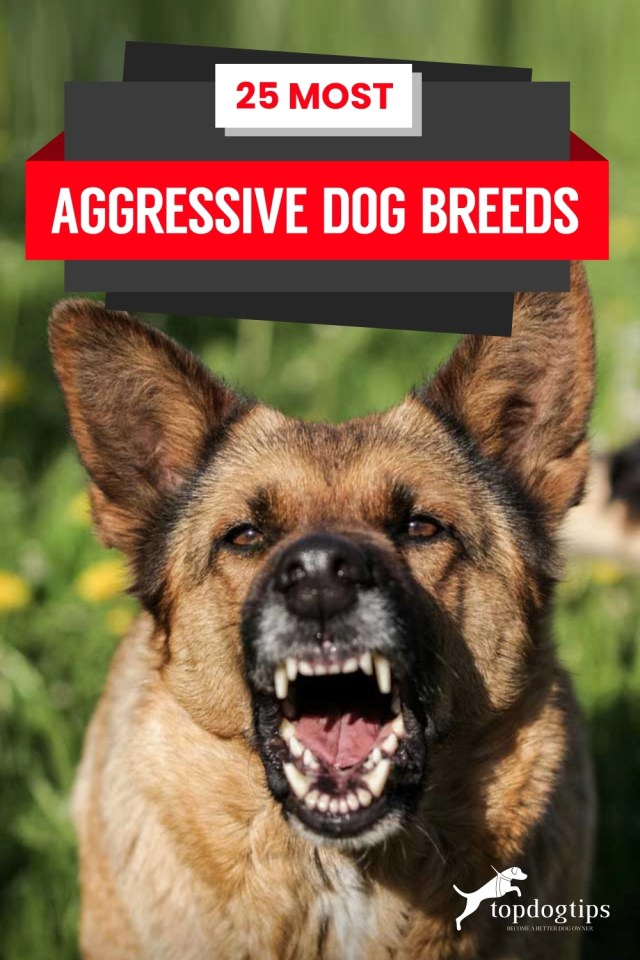 20 Most Aggressive Dog Breeds
