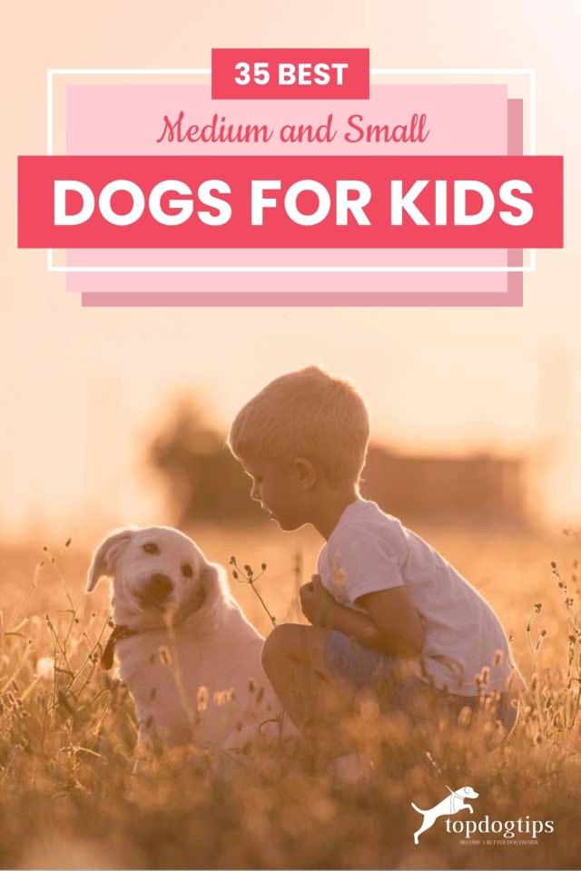 35 Best Medium and Small Dogs for Kids