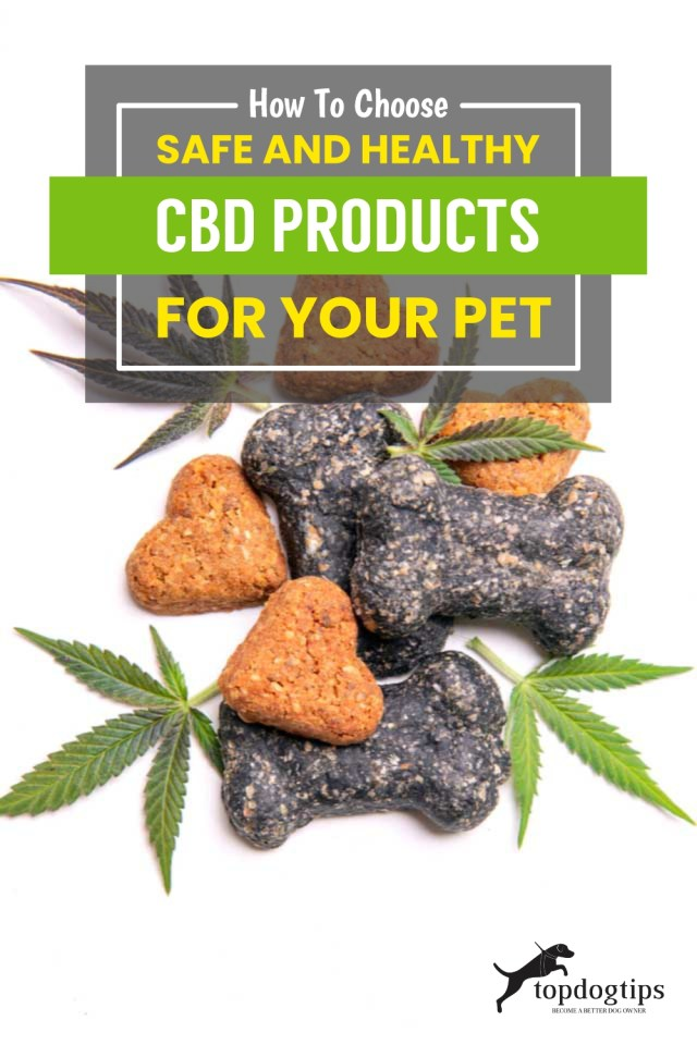 How To Choose Safe and Healthy CBD Products for Your Pet