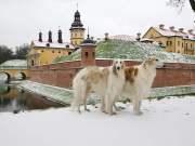 Russian Dog Breeds