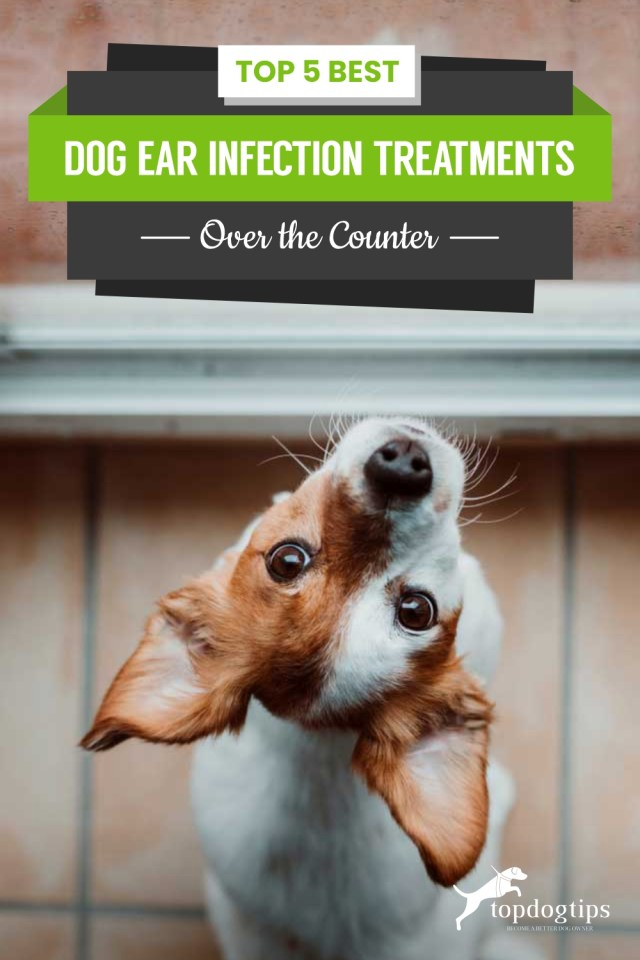 Top 5 Best Dog Ear Infection Treatments (Over the Counter)