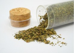 herbal remedies for dogs Catnip Plant