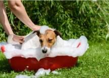 dog tick home remedies shampoo