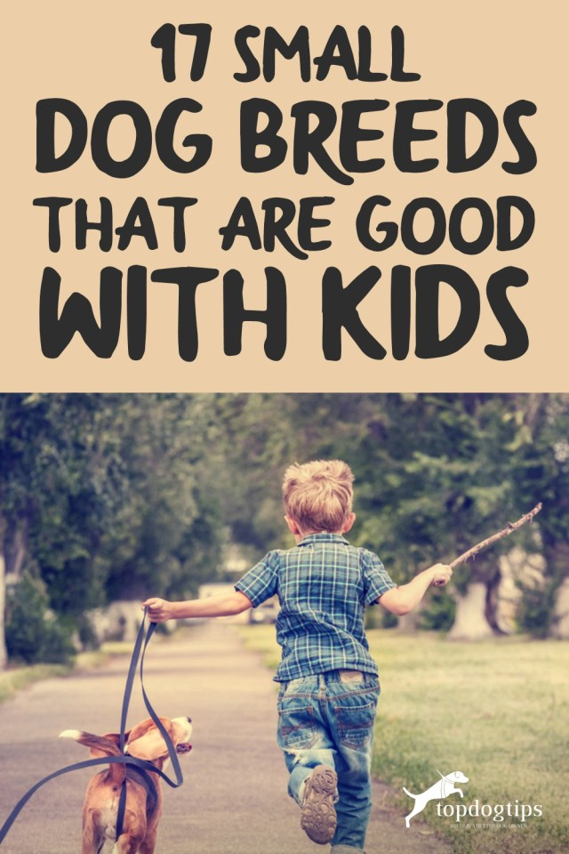 17 Small Dog Breeds That Are Good With Kids
