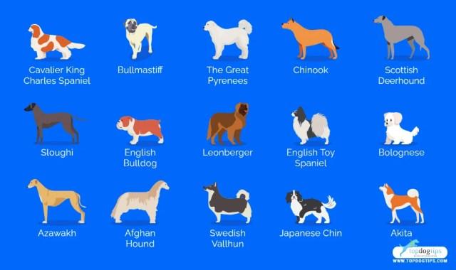 quiet dog breed