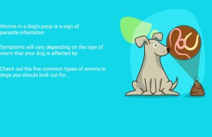 Worms in Dog Poop