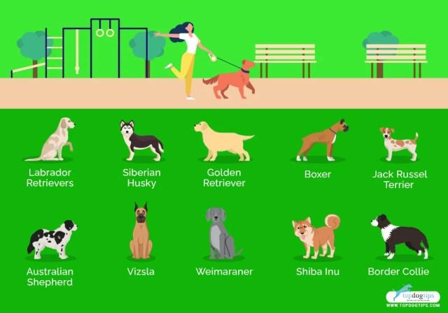 Dog Breeds for Women