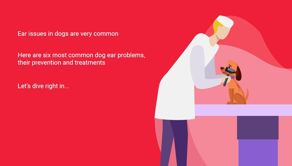 6 Most Common Dog Ear Problems
