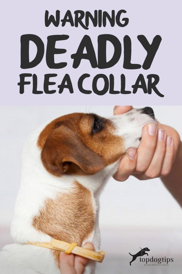 WARNING- Deadly Flea Collar