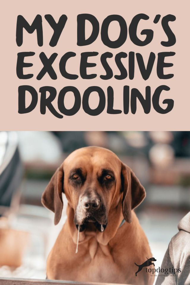 Dog Excessive Drooling