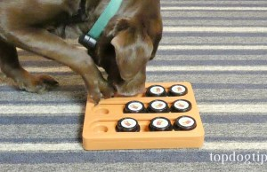 Our Pets Sushi Dog Puzzle Toy