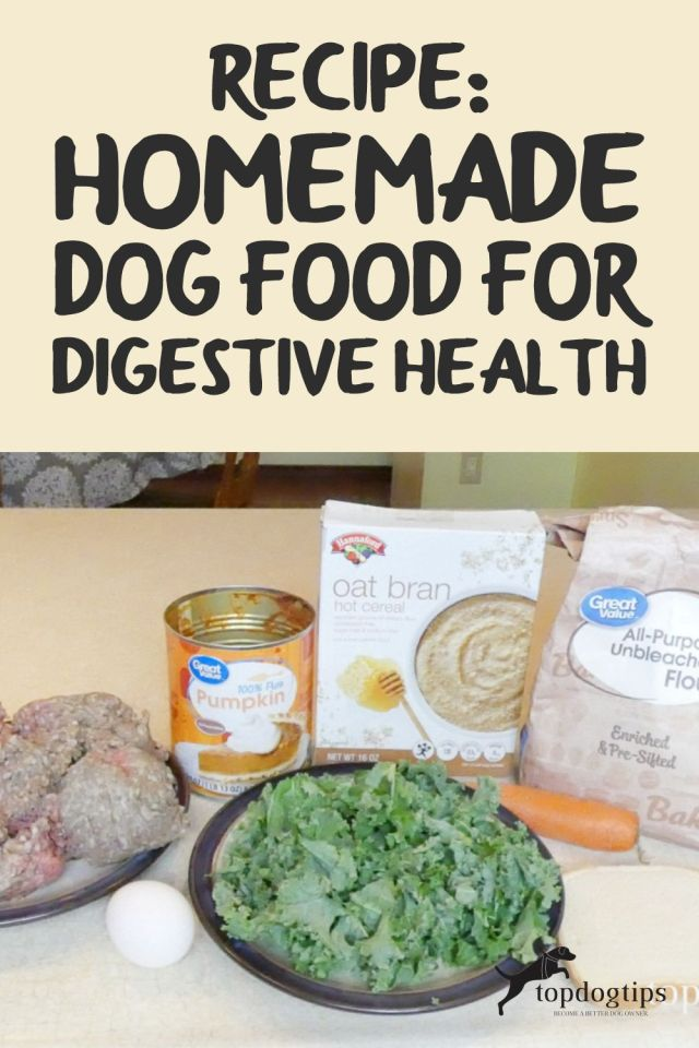 Dog Food for Digestive Health