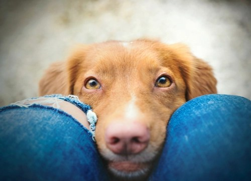 home remedies for pink eye dogs