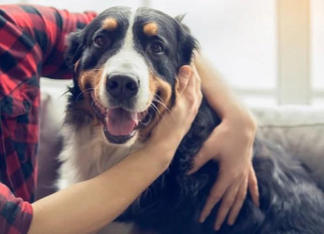 natural antibiotics for dogs