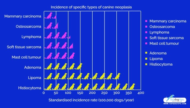 Cancer-Causing Dog Products