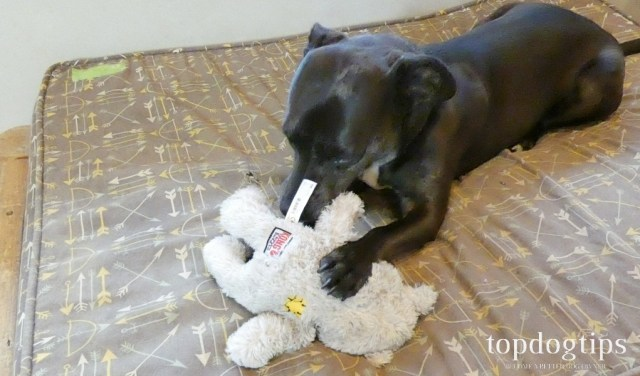 Dog chewing stuffed toy