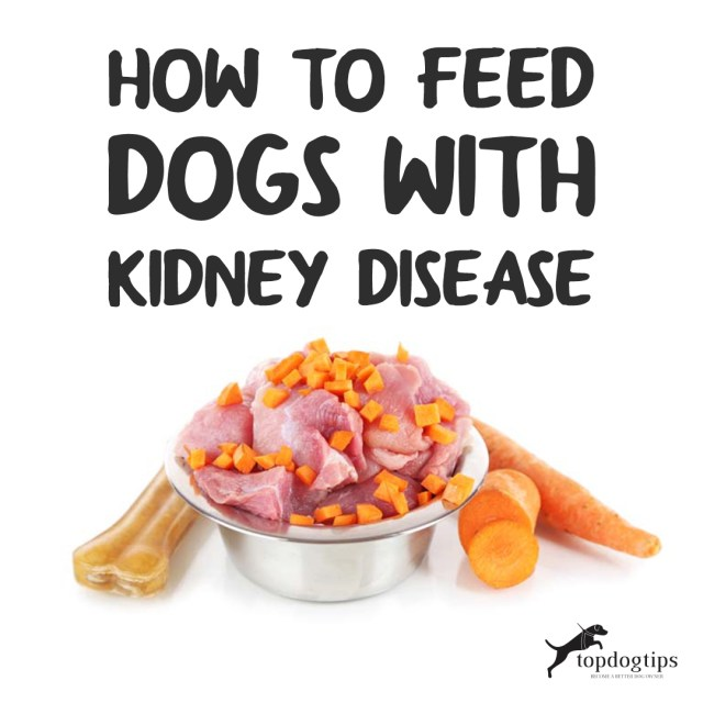 Feed Dogs With Kidney Disease