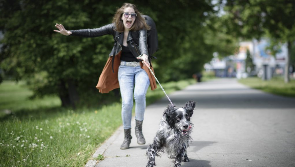 Top 10 Best Leashes for Dogs That Pull