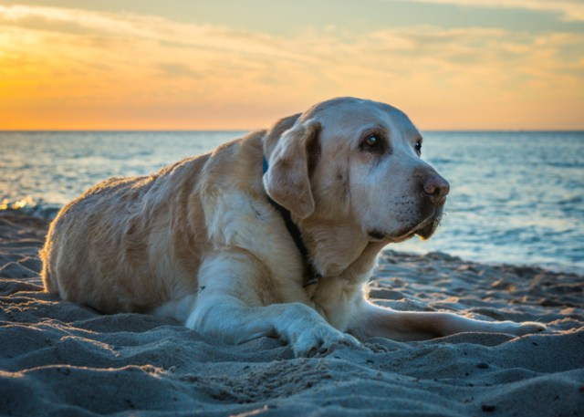 Causes of Dog's Joint Health Problems