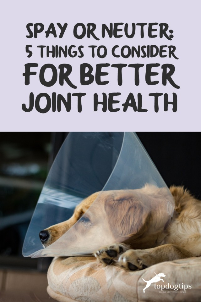 Spay or Neuter Joint Health