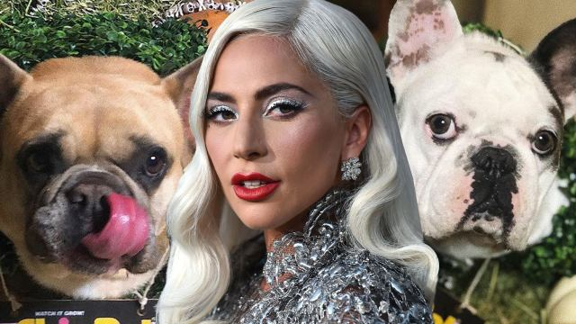 lady gaga with her dogs