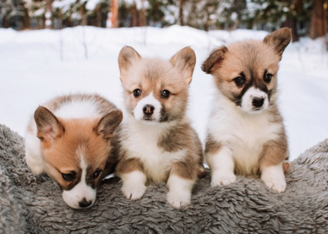 Factors to consider when you get a puppy