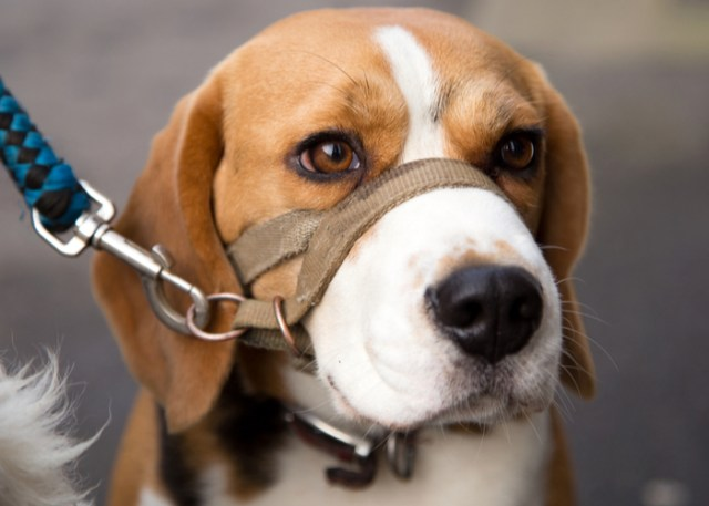 dogs can detect covid