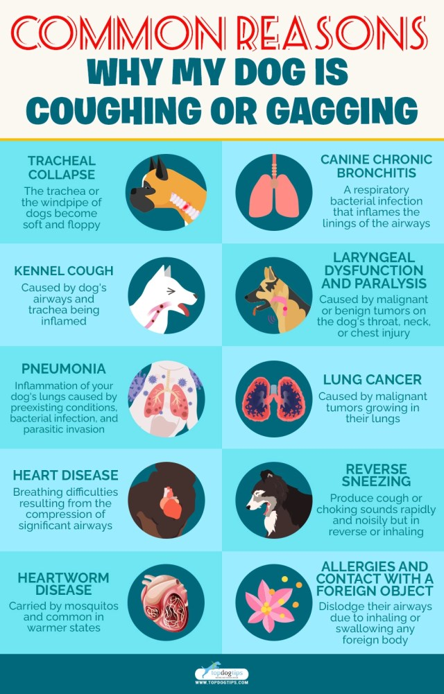 Coughing, Gagging and Choking in Dogs
