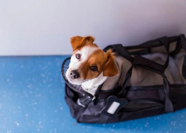 Dog Etiquette 1 Ask Permission