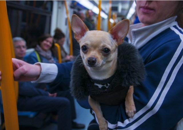 Dog etiquette 7 Securing Fido