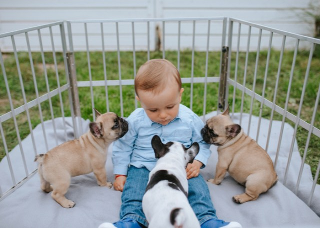 Flat faced dogs with a child