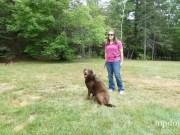 Kurgo Quantum Dog Leash
