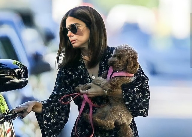 Sandra Bullock and Toy Poodle, Sweetie